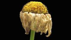 wilted-flower-1940x900_34940