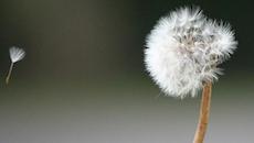 20141105221137-failure-seed-growth-success
